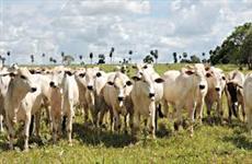 vende-se fazenda de 1046 ha para criacao de gado no Tocantins