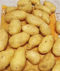 Batata importada Holandesa de Alta Qualidade e padrão