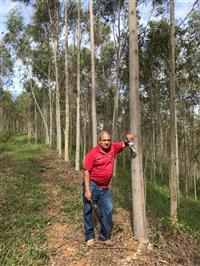 Fazenda eucalipto Citriodora