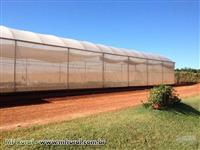 Estufas agrícola