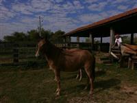 burros e mulas