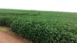 Produtos Agrícolas - Fosforo, Potássio, Nitrogenio, Cálcio, Magnésio, Boro, Npk - FRETE GRÁTIS