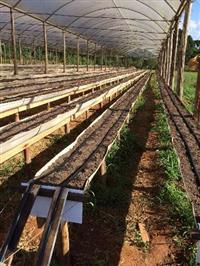 Calha para cultivo de morangos e orgânicos