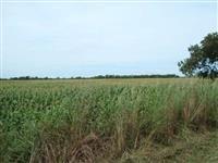 Fazenda com 1500 hectares próximo a Araguaina em Tocantins.