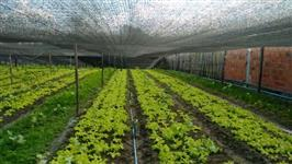 Tela Agrícola Sombrite 50%
