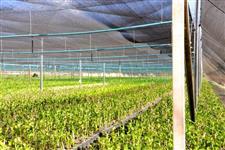 Tela Agrícola Sombrite 35%