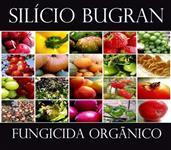 SILÍCIO EM PÓ FUNGICIDA ORGÂNICO (94,6% de silicato puro)