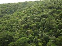 Área Para Compensação de Reserva Legal no Bioma Mata Atlântica