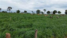 Fazenda Irrigada - Cana - Lavoura - Pecuária