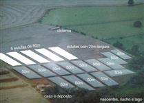 Sitio 9,7 hectares + 19 estufas de tomates + casa e infraestrutura (direto com proprietário)
