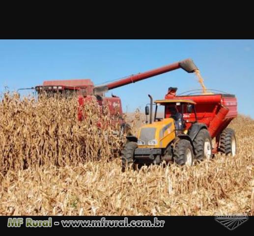 Serviços agricolas Amaral