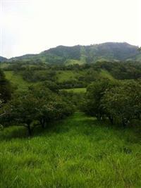 Vendo sitio no extremo sul de minas - Cambui