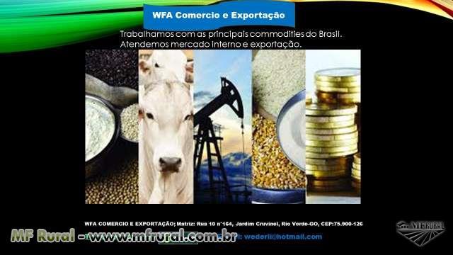 temos soja GMO grande quantidade, nos estados de Mato Grosso, Goias, e São Paulo.