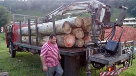 Toras  de  eucalipto   com  50  anos   em  Jundiai sp