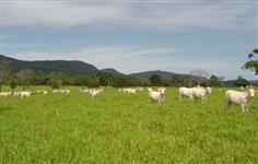 Fazenda em Pirenópolis