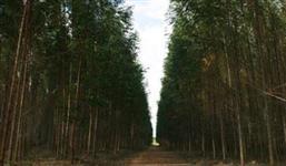 Credito Reposição Florestal