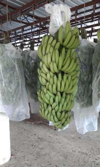 Venda de banana