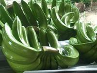 banana nanica para exportação