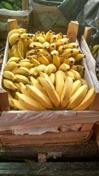banana e palmito