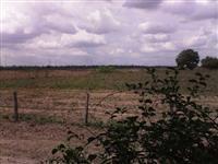 Arrendo 350 hectares para soja