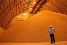 Exportação - Açúcar IC45, Soja, Milho, Óleo de Soja e Óleo Degomado