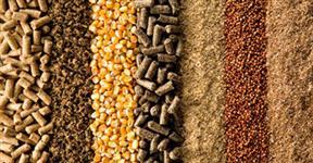 Soja em grãos, farelo de soja, milho, sorgo, dentre outros