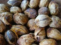 Procuro sementes coco guariroba/gueroba
