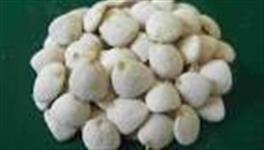 Noz da Índia Original