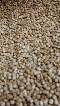 Quinoa Chia Amaranto