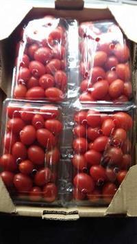tomate suit grape