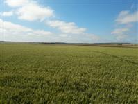 Fazenda Região Paranapanema