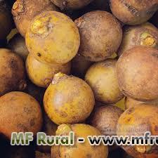 compro coco de qualquer especie fruto maduro