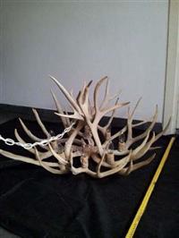 Lustre chifres de cervo - verdadeiro