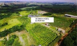 Plantação de Lichia, Uva, Maracujá e Pêssego com 4 casas e Lago