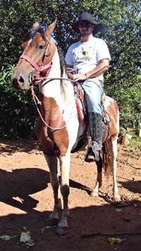Excelente cavalo inteiro, marcha picada.Leiam a descrição .Em Lagoa Dourada - MG