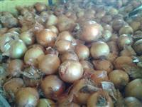 Batatas e cebolas direto do produtor