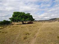 Fazenda 2 Irmãos Munípio de João Pinheiro-MG