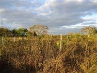 Sitio Rodão 0023 Munípio de João Pinheiro-MG