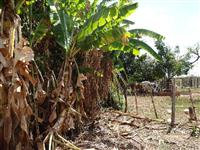 Fazenda Cantinho da serra 0053 Município de João Pinheiro