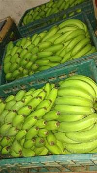 Distribuidora de banana
