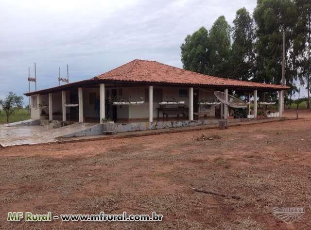 FAZENDA -ALTO  GARÇAS/MT