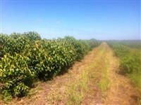 Vende-se Fazenda em Cerejeiras R.O