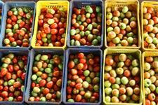 tomate, Pimentão, Pepino, Abobrinha , chuchu