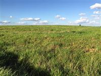 Fazenda no município de Janiópolis/PR com área total de 100 hectares