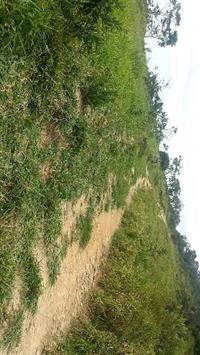 Fazenda 86 hectares