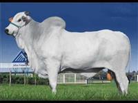 Compro hormônio para crescimento bovino e equino