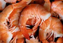 Vendo camarão do Ceara para todo o Brasil
