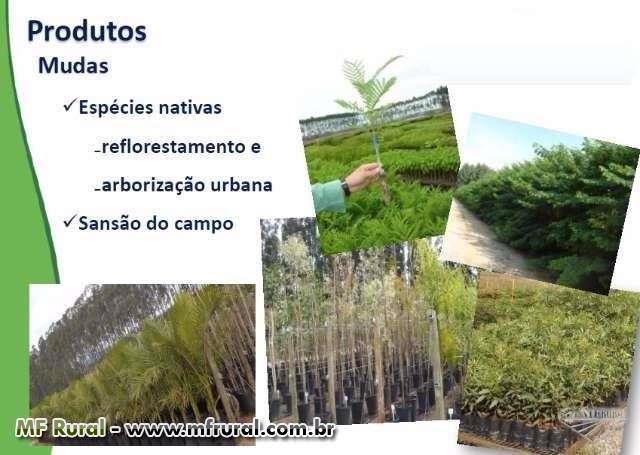 Árvores nativas