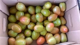 tomate italiano tipo exportação