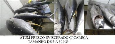 OFERTA ATUM FRESCO EVISCERADO COM CABEÇA